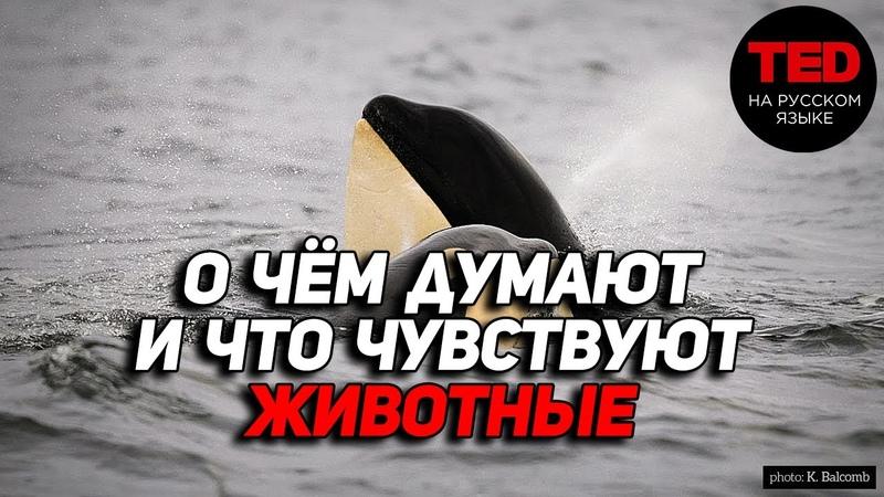 О чем думают и что чувствуют животные / Карл Сафина / TED на русском