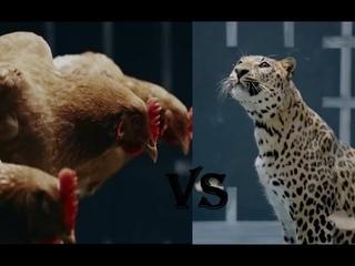 "Реклама Мерседес-Бенц - ""Курица"" + Пародия от Ягуар"