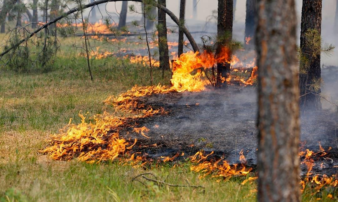 В лесах Саратовской области введён противопожарный режим