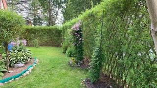 Русская ива. Видео-обзор. Живая изгородь и плетёные деревья на дачном участке.