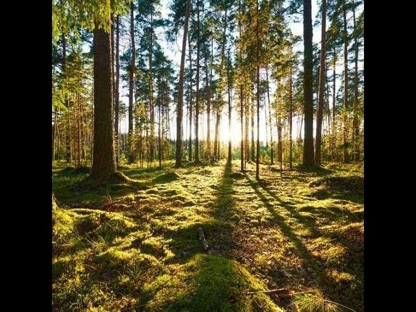 Ernst Jünger - Der Waldgang