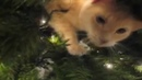 Кошки на ёлке!