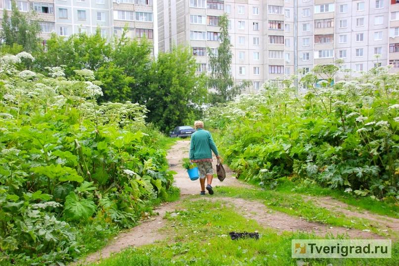 БОРЩЕВИК СОСНОВСКОГО: ОБЗОР СИТУАЦИИ В РОССИИ, изображение №1