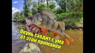 Подобрали ПРИМАНКУ и наловили СТАЙНОГО ОКУНЯ НА СПИННИНГ в таёжной реке