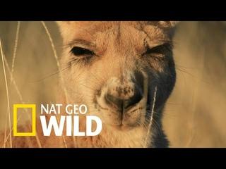 Nat Geo Wild: Дикие животные 24 часа. Австралия после муссона