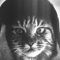Фотография профиля Захара Вевы ВКонтакте