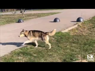 Собака потерялась - БЖonline | Балтийская Жемчужина