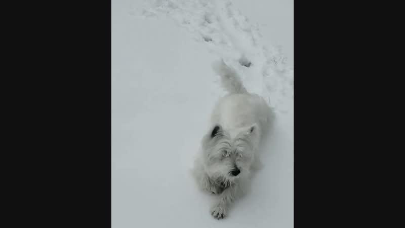 самая искренняя радость снегу
