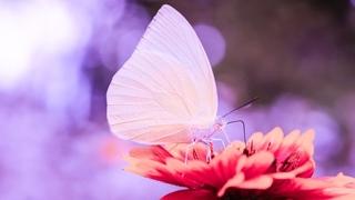 Deep Healing Miracle Tone 24/7 💜 Music For Meditation   Enhance Self Love Energy   Positive Vibes