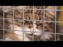 Beglobiai gyvūnai ieško namų