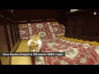 По стопам великого мариниста Кот Мостик в галерее Айвазовского