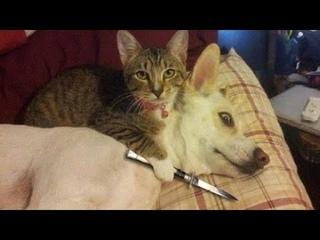 ПРИКОЛЫ С ЖИВОТНЫМИ 😺🐶 Смешные Животные Собаки Смешные Коты Приколы с котами Забавные Животные #88