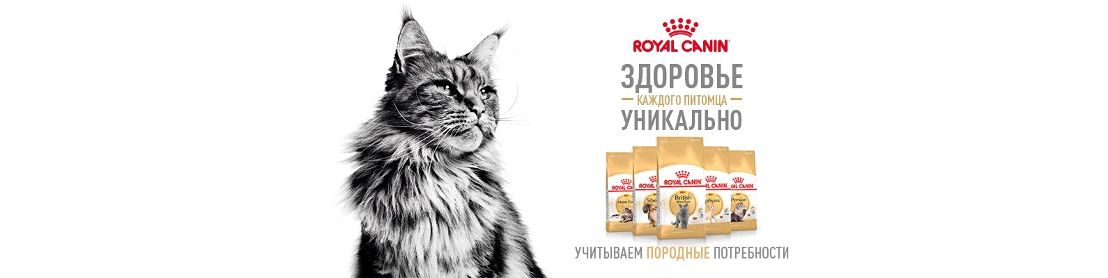 Консервы Роял Канин (Royal Canin) для кошек
