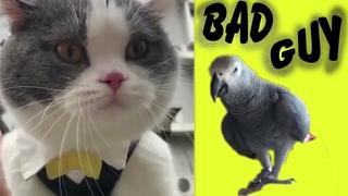 Bad Guy (Animal Remake)
